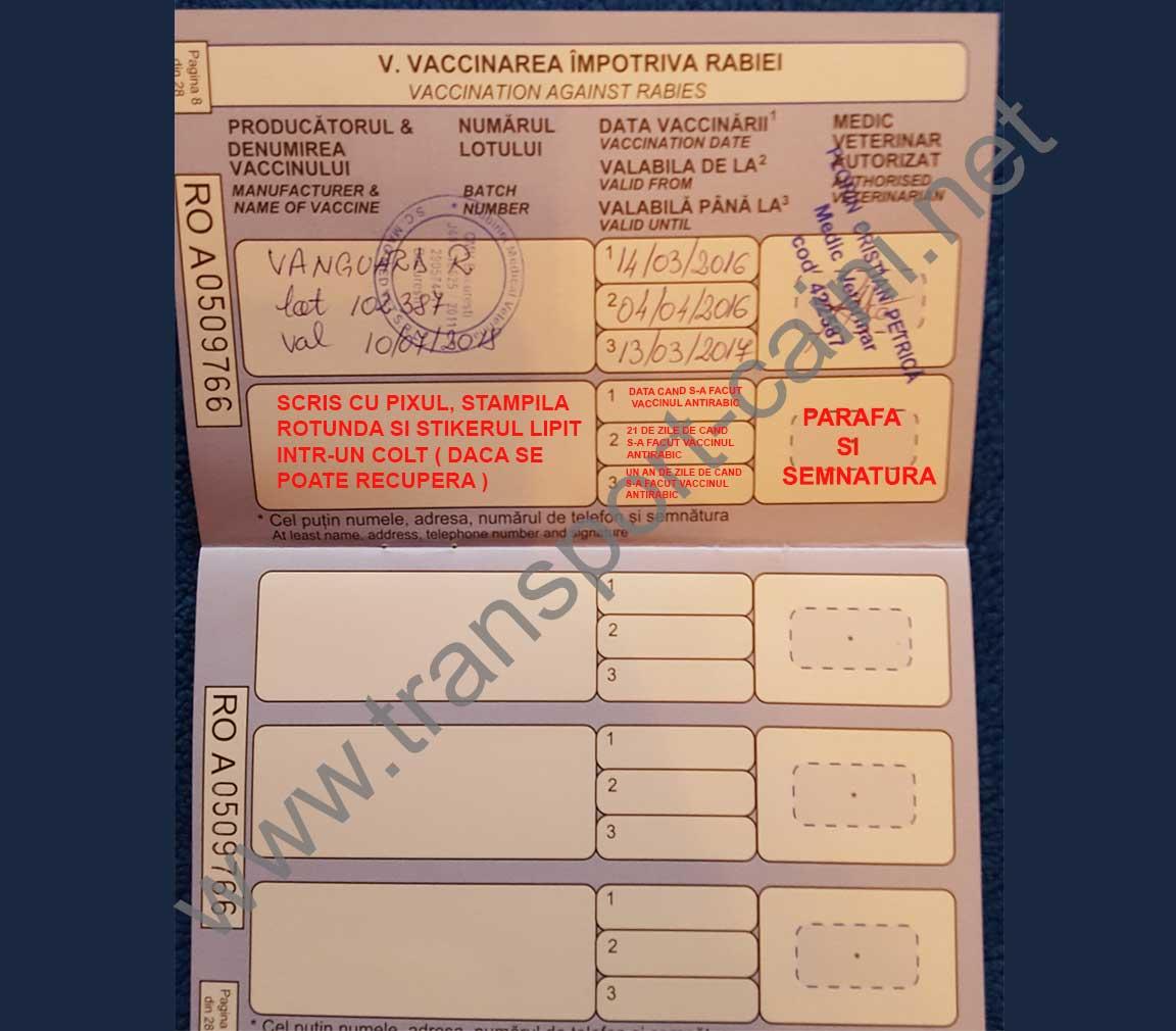 Procedura transport caini, Acte necesare, Pasaport transport caini |  Transport caini international